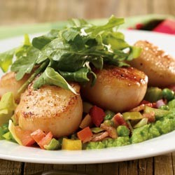 Scallops on a green salad